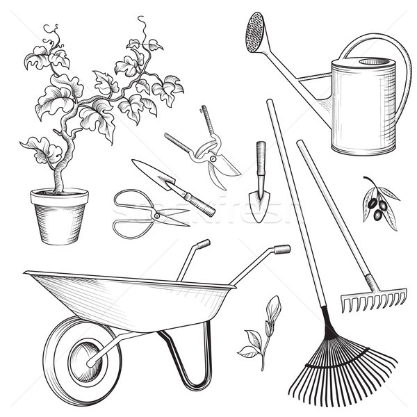 Garden tools set. Gardening plant, watering can, wheelbarrow, ra Stock photo © Terriana