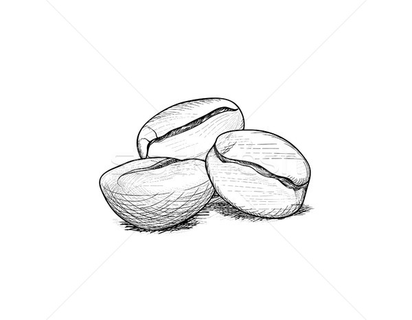 Coffee beans. Coffee icon set sketch. Line art doodle illustrati Stock photo © Terriana