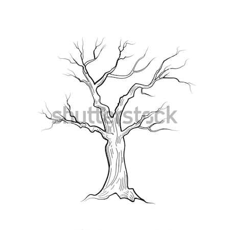 Tree without leaves. Nature sign Floral winter outdoor icon Stock photo © Terriana