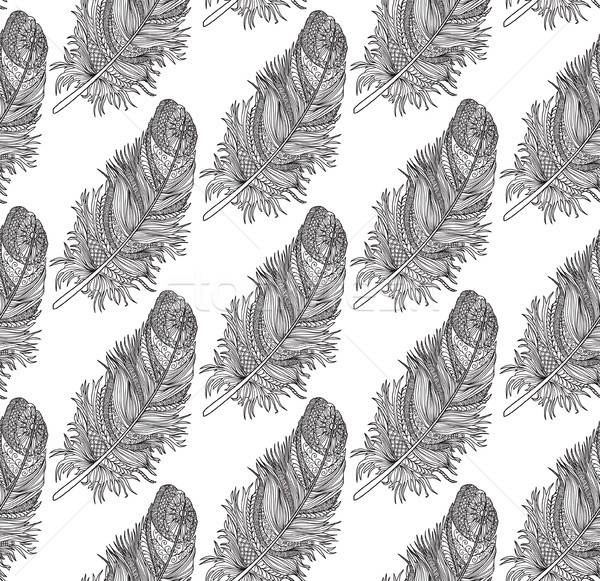 Uccelli piuma americano nativo Foto d'archivio © Terriana