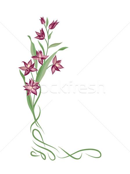 Photo stock: Floral · bouquet · cadre · tourbillon · frontière · fleurs