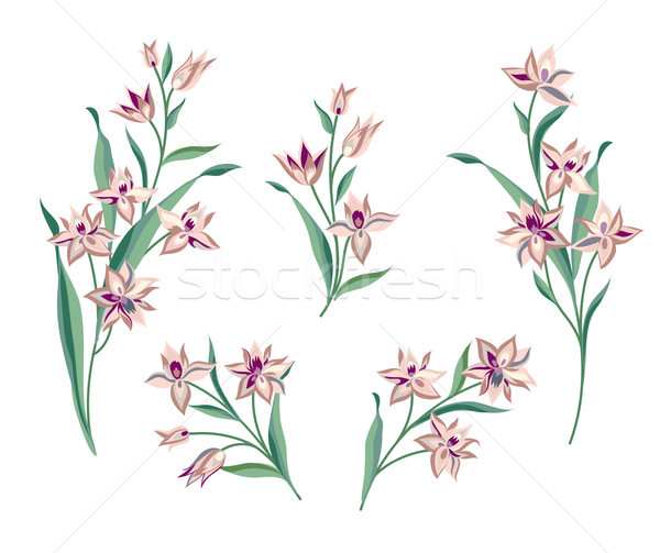 Flower set. Floral bouquet summer decorative collection for gree Stock photo © Terriana
