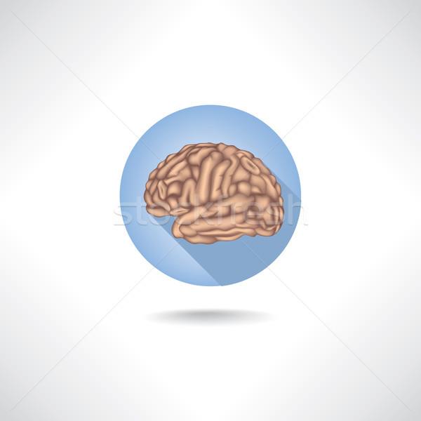 Cervello icona umani organo anatomia medici Foto d'archivio © Terriana