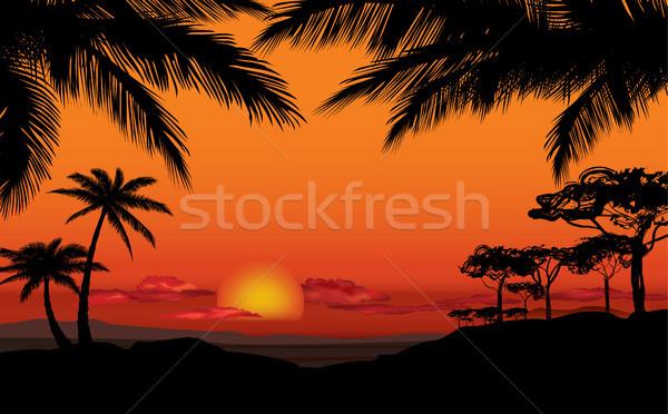 African Landschaft Savanne Natur Sonnenuntergang Skyline Stock foto © Terriana