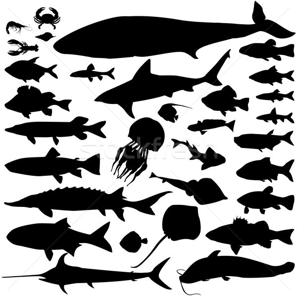 River, sea fish food silhouette set. Marine fish and mammals. Seafood icon collection. Ocean underwa Stock photo © Terriana