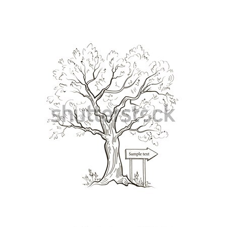 Tree, arrow sign. Summer nature landscape Outdoor signpoint Stock photo © Terriana