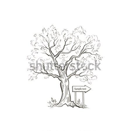 Ağaç ok işareti yaz doğa manzara açık Stok fotoğraf © Terriana