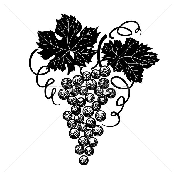 Grape branch engraved. Berry, leaves Vineyard floral sign Stock photo © Terriana