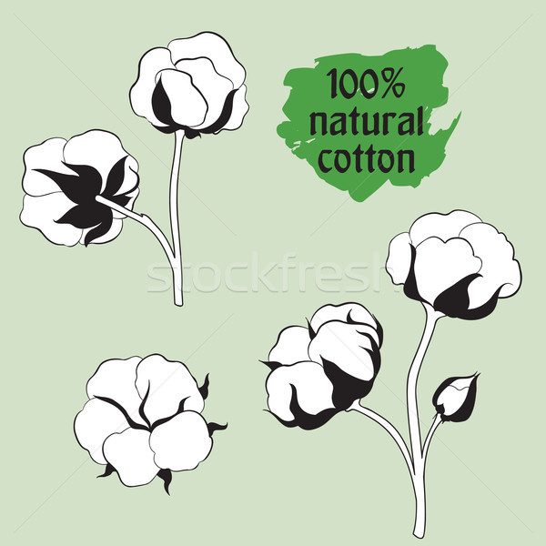 Cotton set. Natural material sign. Drawing Flower cotton. Stock photo © Terriana