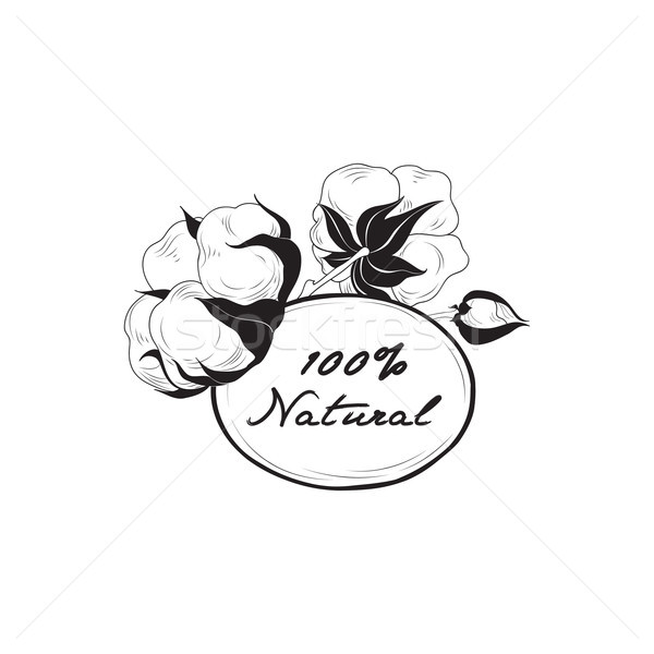 Cotton label. Natural material sign with cotton flower boll. Flo Stock photo © Terriana