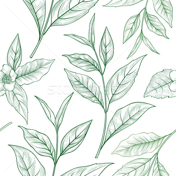 Tea branch floral seamless pattern. Tea leaves background Stock photo © Terriana