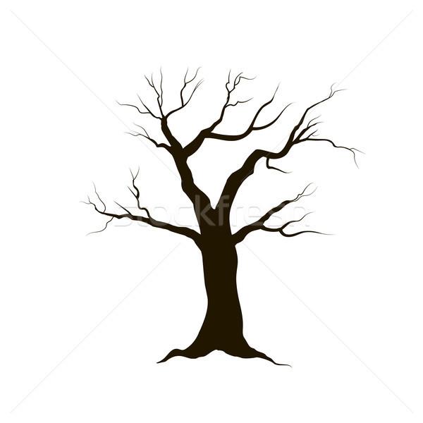 дерево листьев природы знак зима лес Сток-фото © Terriana