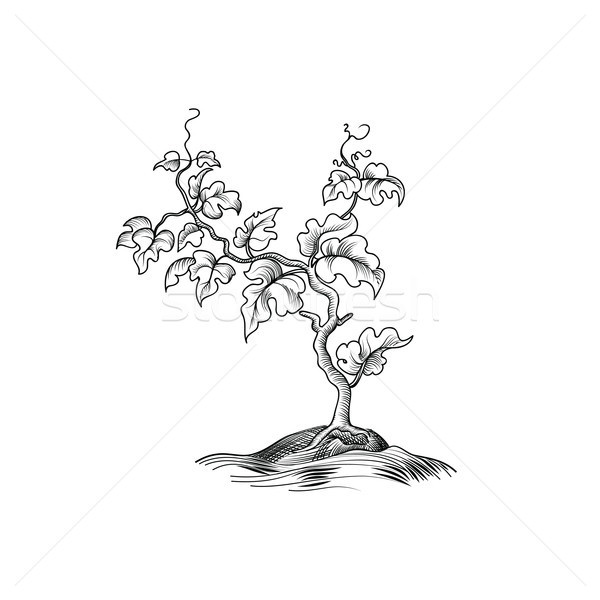 Plant with leaves engraving. Decorative grape tree growth Bonsai Stock photo © Terriana