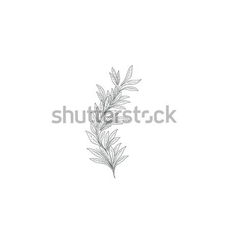 Branch with leaves sketch. Nature lush decor background Stock photo © Terriana