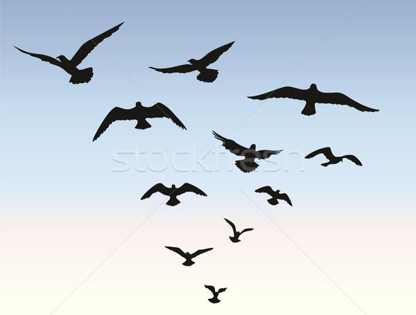 Bird flock flying over blue sky background. Animal wildlife Stock photo © Terriana