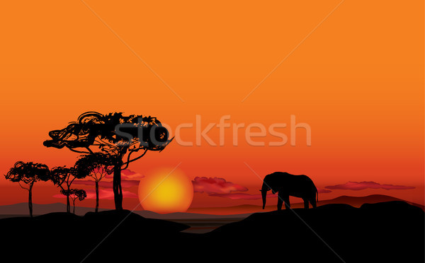 Afrikaanse landschap dier silhouet savanne zonsondergang Stockfoto © Terriana
