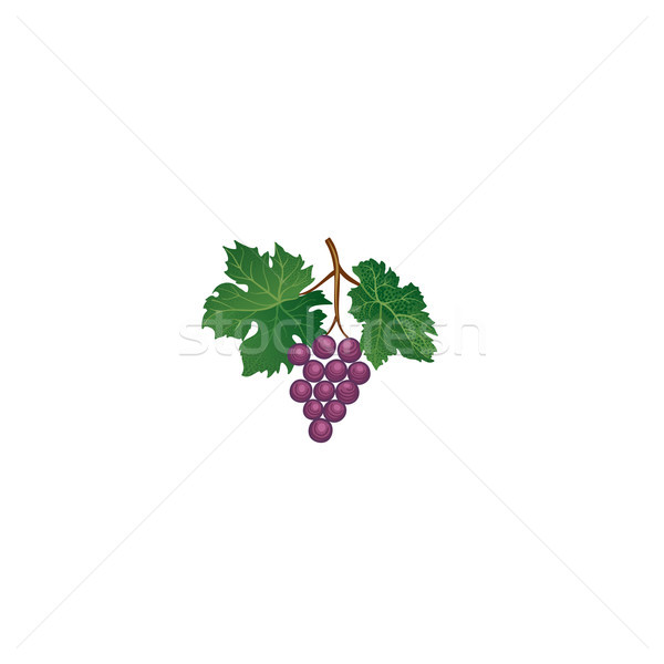 Grape branch. Floral wineyard retro sign. Garden background. Win Stock photo © Terriana