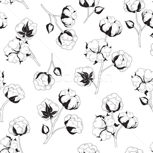 Floral seamless pattern with flower cotton.  Nature background Stock photo © Terriana