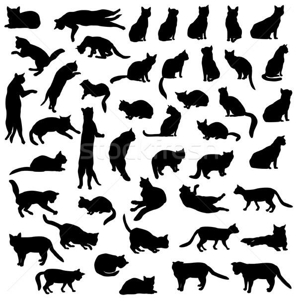 Katten silhouet ingesteld vrouw groep zwarte Stockfoto © Terriana
