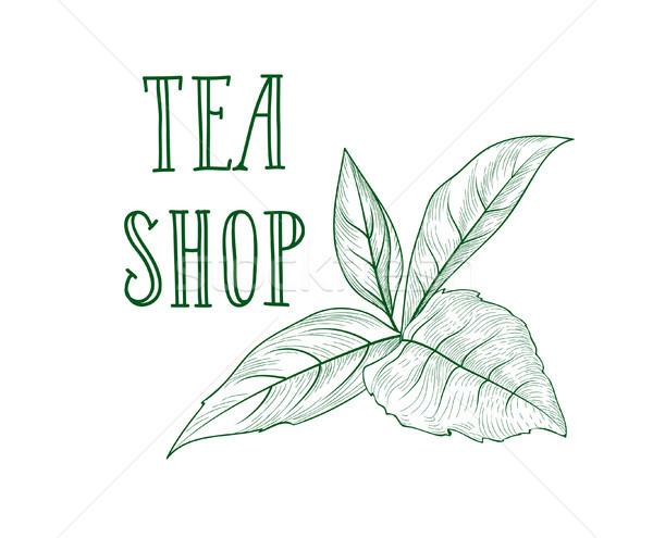 зеленый чай трава Label чай магазин Сток-фото © Terriana