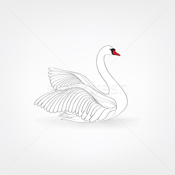 Fehér madár izolált úszik hattyú firka Stock fotó © Terriana