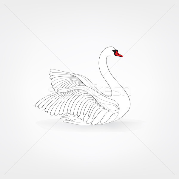 Beyaz kuş yalıtılmış yüzme kuğu karalama Stok fotoğraf © Terriana