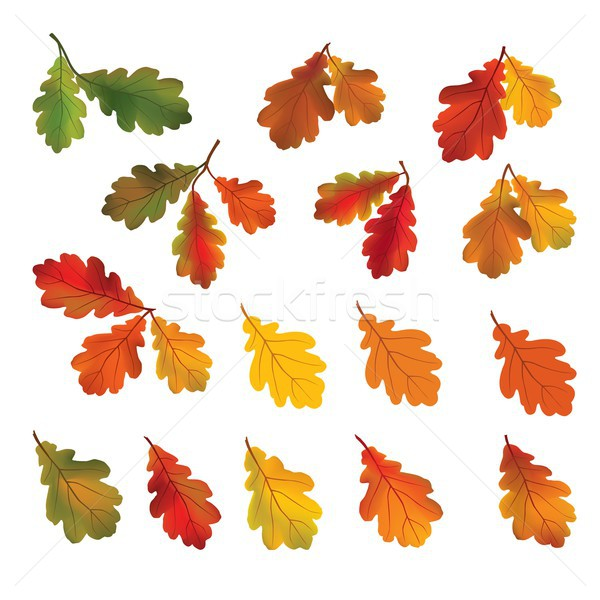 Autumn leaves isolated on white background. Fall icon. Nature floral decor Stock photo © Terriana