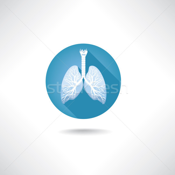 Lungs, bronchi icon. Human organ anatomy sign Stock photo © Terriana