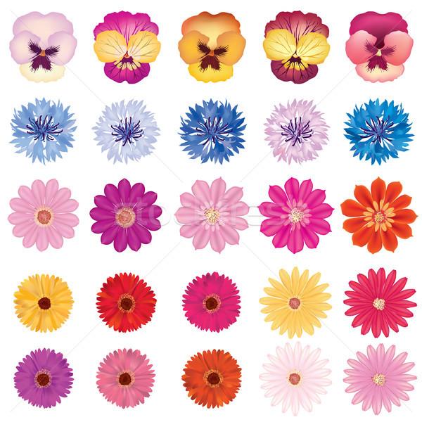 Floral bloom set. Different summer flower background. Flourish garden design elements Stock photo © Terriana