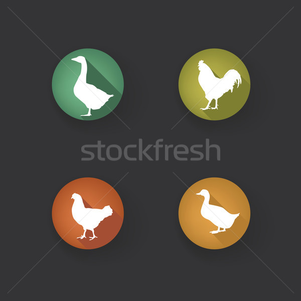 Farm birds silhouette. Animals vector set. Livestock icons.  Stock photo © Terriana