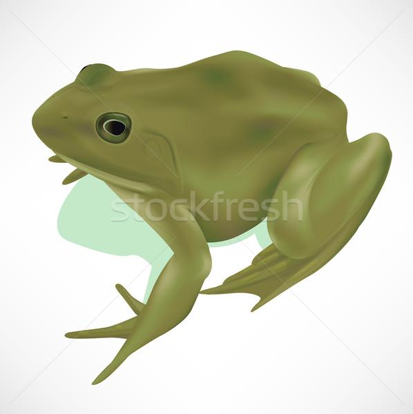 Realistic Frog Stock photo © TheModernCanvas