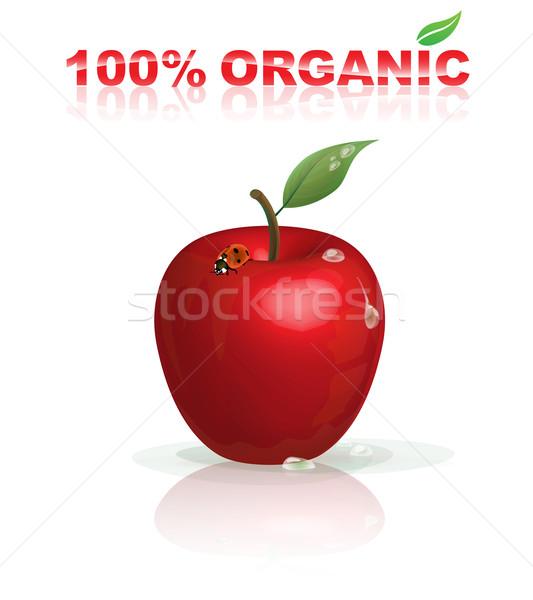 Organik elma doğal kırmızı uğur böceği su damlası Stok fotoğraf © TheModernCanvas