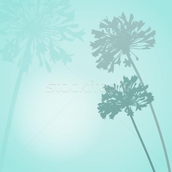 Flor silueta tarjeta cuadrados espacio texto Foto stock © Theohrm