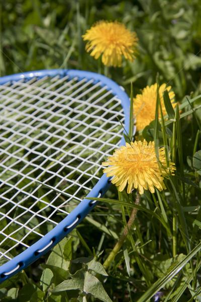 Blauw racket badminton gras voorjaar sport Stockfoto © TheProphet