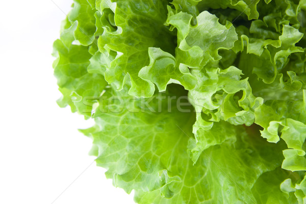 Photo stock: Vert · laitue · salade · alimentaire · feuille · agriculture