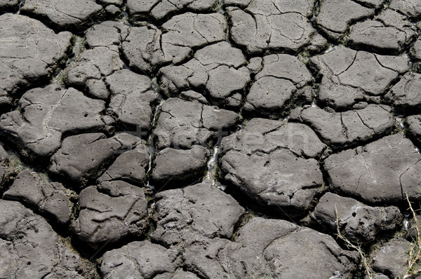 высушите треснувший земле сушат вверх реке Сток-фото © thisboy