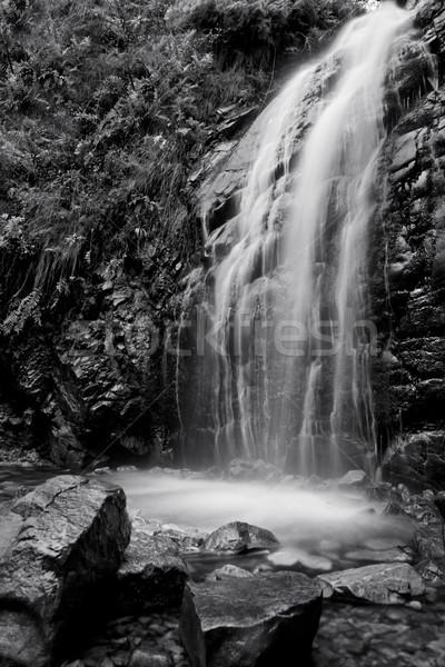 черно белые водопада Nice потока передний план дерево Сток-фото © thisboy