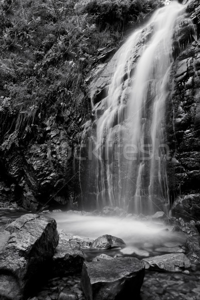 Blanco negro cascada agradable corriente primer plano árbol Foto stock © thisboy