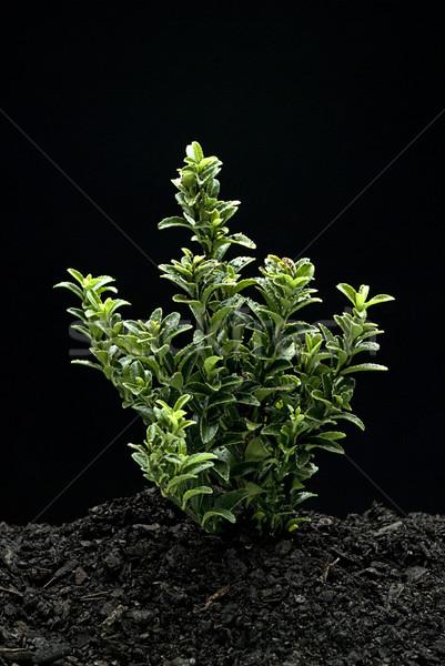Plant Stock photo © thisboy