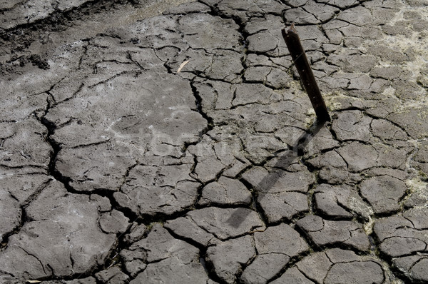 Dry Cracked Earth Stock photo © thisboy