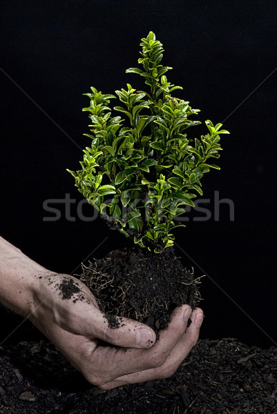 Holding a Tree Stock photo © thisboy