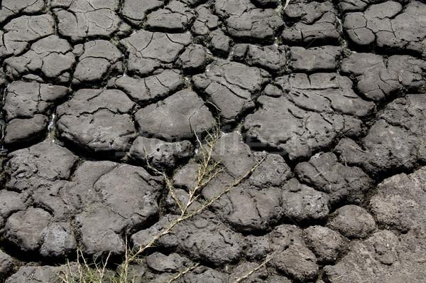 Secar rachado terra secas para cima rio Foto stock © thisboy