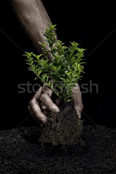 Ağaç erkek eller küçük el Stok fotoğraf © thisboy