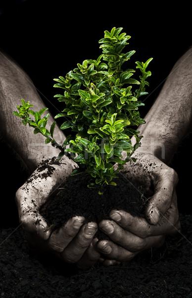 árbol manos masculina pequeño mano Foto stock © thisboy