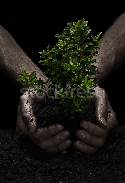 Tree in Hands Stock photo © thisboy