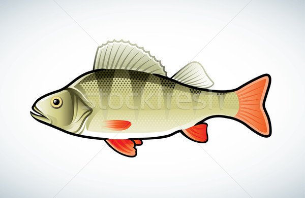 Photo stock: Illustration · isolé · blanche · poissons · mer · design