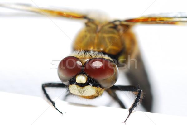 Dragonfly мнение большой глазах тесные пейзаж Сток-фото © thomaseder
