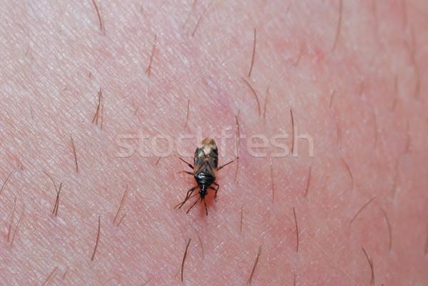 カブトムシ 皮膚 小 人間 髪 花 ストックフォト © thomaseder