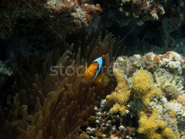 Stock fotó: Hal · néz · kicsi · kamera · tengerpart · természet