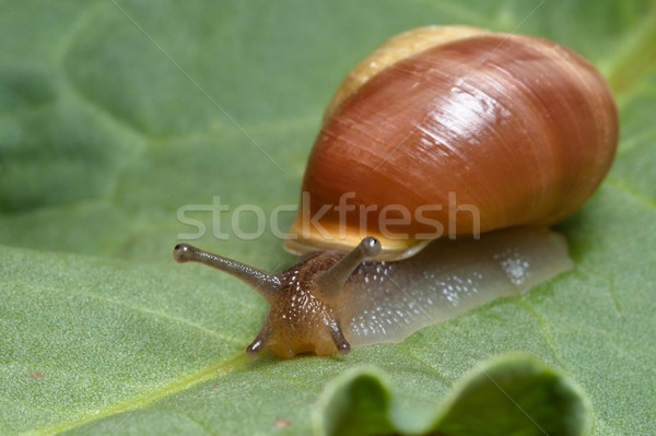 улитки зеленый лист природы лист оболочки Сток-фото © thomland